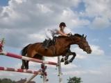 В Бишкеке проведут открытый чемпионат по конному спорту